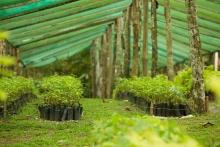 CO2OL - CO2 Consulting für Klimaneutralität und Klimaschutz