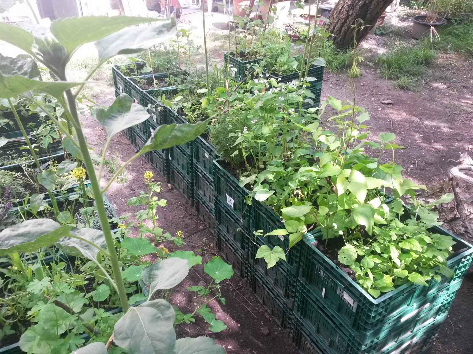 Mobile Gärten